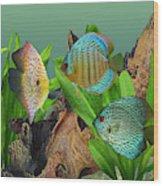 Three Discus Fish Wood Print