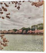Tidal Basin Blossoms Wood Print