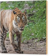 Tiger On A Stroll Wood Print