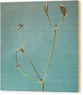 Tiny Seed Pod Wood Print