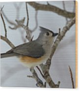 Titmouse Winter Morning Cutie  Wood Print