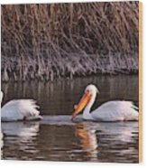 To Pelicans Trolling For Fish Wood Print