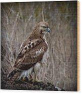 Totem Animal Book Hawk Wood Print