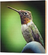 Totem Animal Book Hummingbird Wood Print