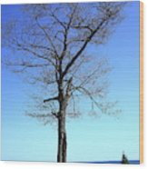 Tree And Great Lake Wood Print
