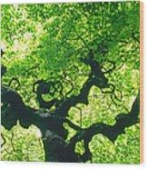 Tree At Arnold Arboretum Wood Print