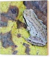 Tree Frog On Yellow Leaf Wood Print
