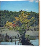 Tree In Mallows Bay Wood Print
