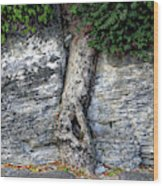 Tree In Stone Wood Print