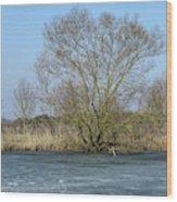 Tree On Frozen Lake Wood Print