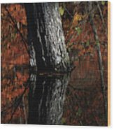Tree Reflects In The Pond Wood Print