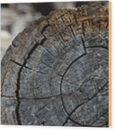 Tree Rings Wood Print