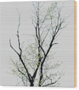 Tree Series Five Wood Print