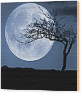Treelight Wood Print