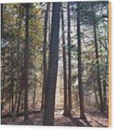 Trees And Shadows  Wood Print