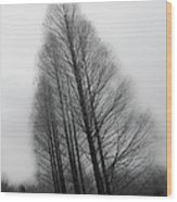 Trees In Winter Without Leaves Wood Print