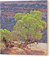 Trees Plateau Valley Colorado National Monument 2871 Wood Print