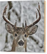 Ten Point Buck 9634 Wood Print