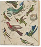 Trochilus - Hummingbirds Wood Print