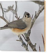 Tufted Titmouse Winter Tranquility Wood Print