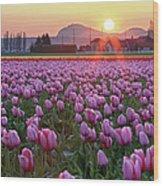Tulip Field At Sunset Wood Print