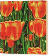 Tulips 2019d Wood Print
