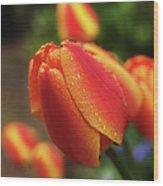 Tulips And Raindrops Wood Print