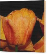 Tulips On A Black Background Wood Print