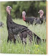 Turkey Flock Wood Print