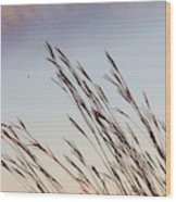 Turkey Foot Grass At Sunset Wood Print