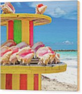 Turks And Caicos Conchs On A Spool Wood Print