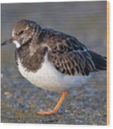 Turnstone Wood Print