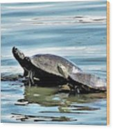 Turtles - Mother And Child Wood Print