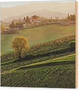 Tuscan Vinyards Wood Print