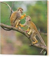 Two Common Squirrel Monkeys Saimiri Wood Print
