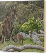 Two Grey Kangaroos In Australian Wood Print