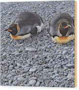Two King Penguins By Alan M Hunt Wood Print