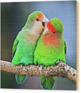 Two Peace-faced Lovebird Wood Print