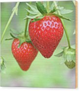 Two Ripe Red Strawberries On The Vine Wood Print