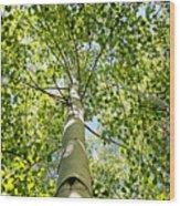 Under The Tall Aspens Wood Print