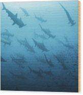 Underwater View Of Scalloped Hammerhead Wood Print