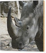 Up Close Look At The Face Of A Rhinoceros Wood Print