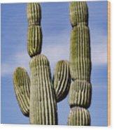 Upward View Of Saguaro Cactus And Blue Wood Print