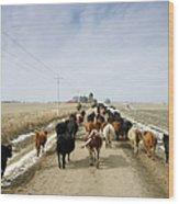 Usa, Nebraska, Great Plains, Herd Of Wood Print