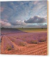 Valensole France Wood Print