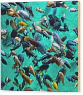 Various Multi-colored African Fish Wood Print
