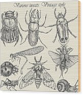 Vector Set Insects In Vintage Style Wood Print