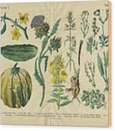 Vegetables And Flowers Of The Garden Wood Print