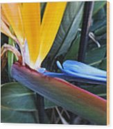 Vibrant Bird Of Paradise #2 Wood Print
