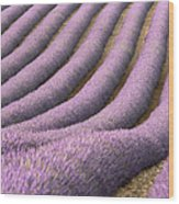 View Of Cultivated Lavender Field Wood Print